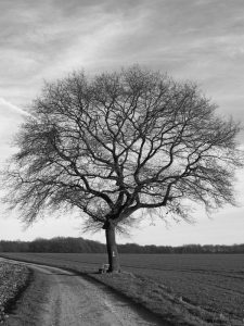 the-lonely-tree